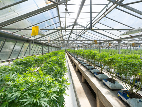 WHY WOULD YOU LEASE TO A MARIJUANA GROWER?