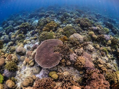 Jak ratować rafy koralowe: 10 sposobów!