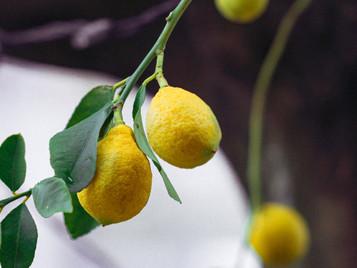 When Life Gives You Lemons, Say Thanks!