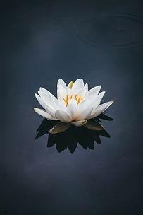 Image by Nong Vang