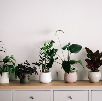 Hard-To-Kill Houseplants For Beginners