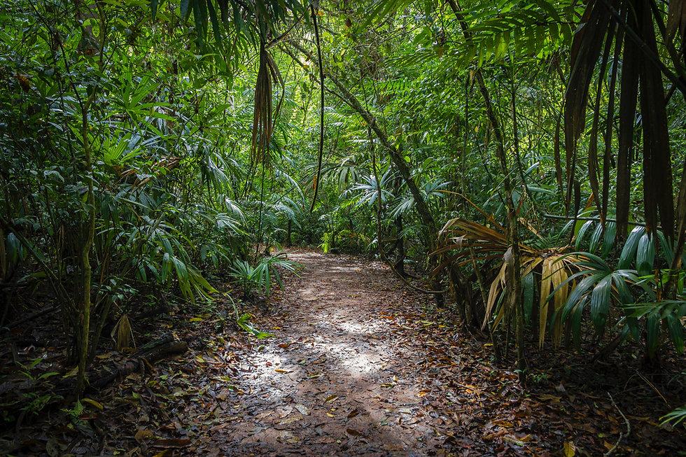 Foto de bosque tropical