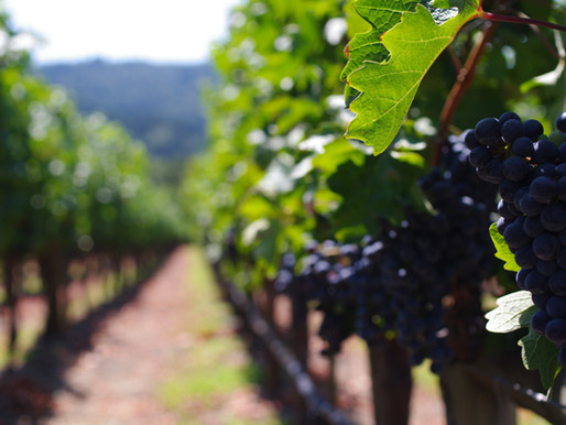 Napa Valley – America's Wine Country