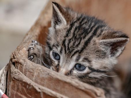 """אנתולוגיה בנושא חתולים, חנוכה תשפ""""א"""