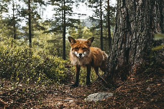 Image by Lukas Zischke