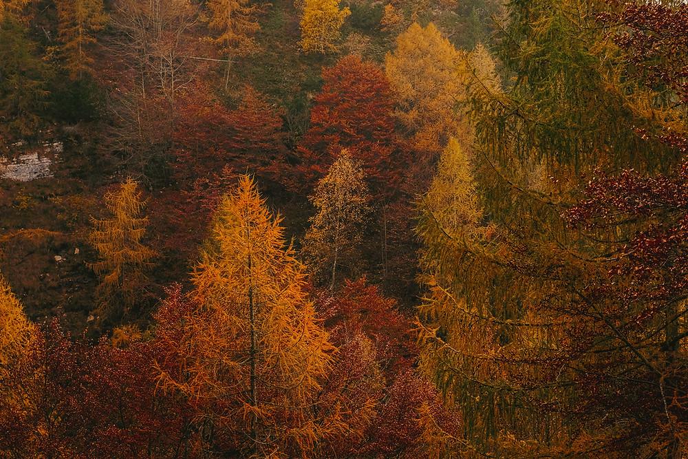 fall foliage in Cleveland Ohio