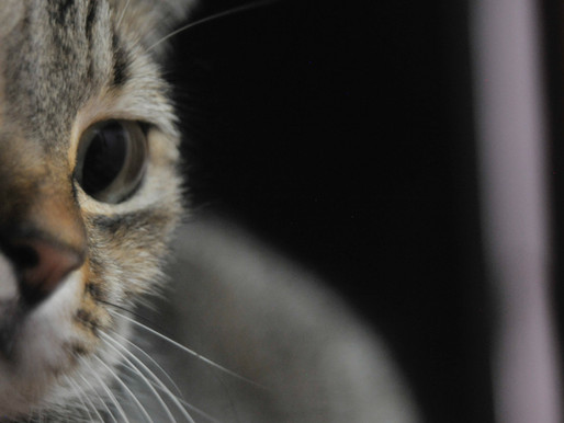 France : Un décret permet de vendre son animal aux laboratoires