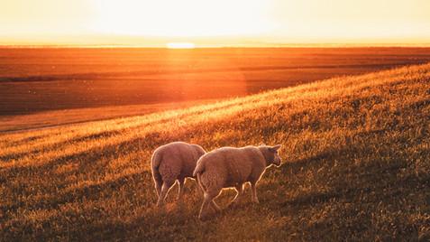 Jesus, the good shepherd - Sunday Service 25.04.21