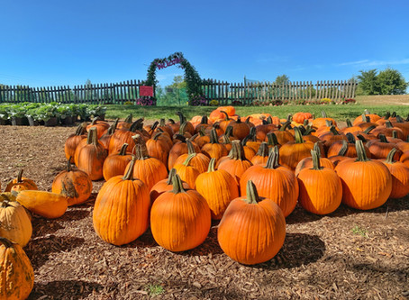 Local Family Farms to Visit This Fall