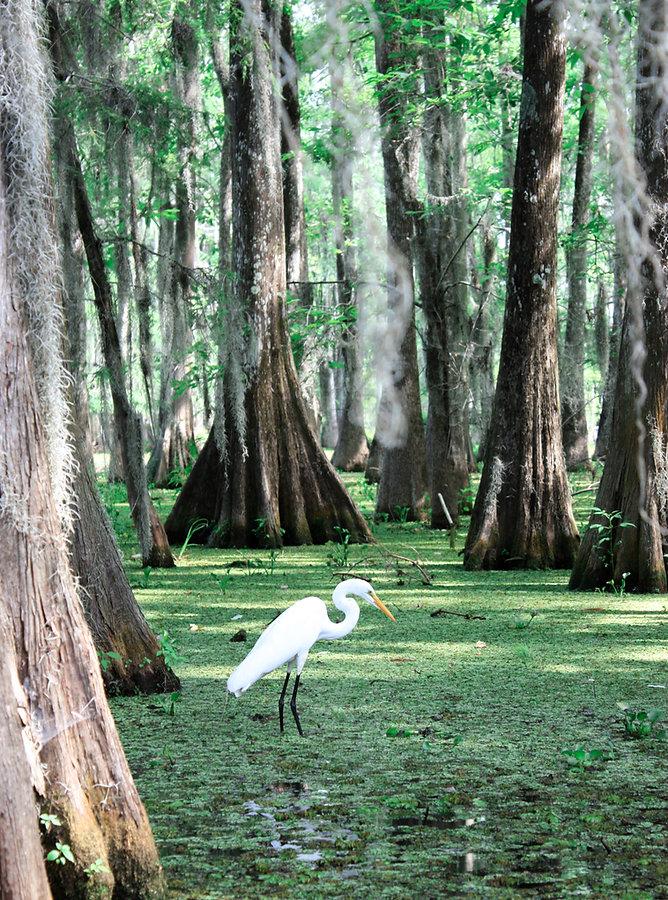 Louisiana Image by Morgane Perraud