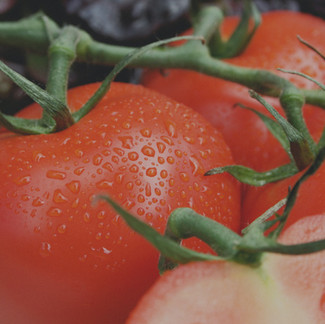 Our Favorite Tomato Varieties