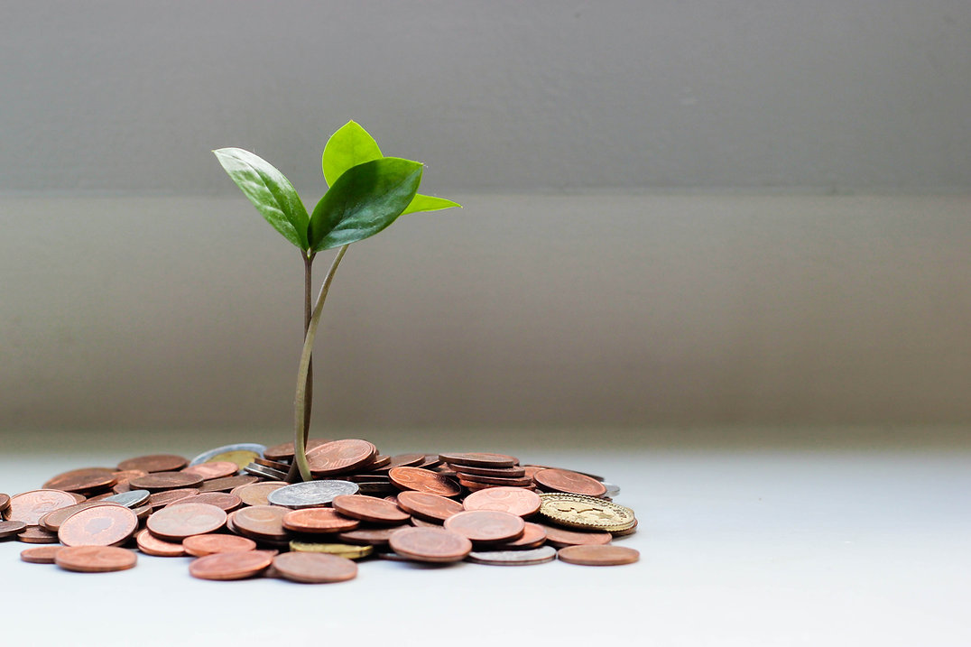 A plant grows up out of a pile of coins on a table.