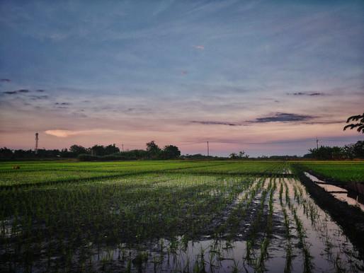 Stagione irrigatoria, un difficile inizio: il comunicato di Est Sesia