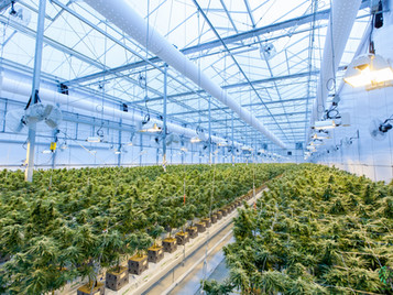 What Do You Want To Know About Plant Lighting In Controlled Environment Crop Production?