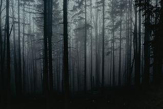 Image by Sergiu Baica