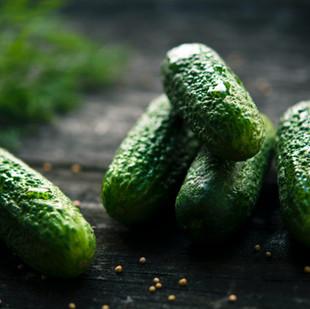 Fermentieren. Wie man Bakterien und Pilze dressiert