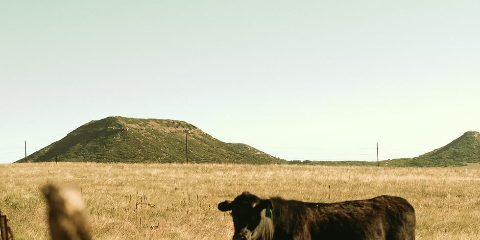 One-shot: Heifer Heist