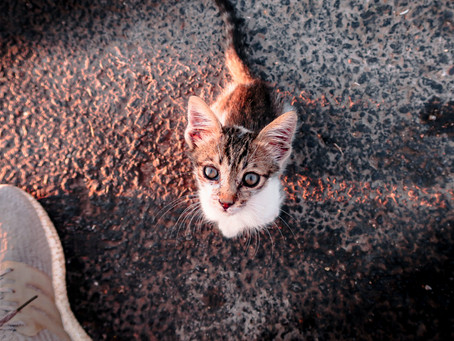 MALTRAITANCE ANIMALE : DÉSORMAIS UN CRIME EN GRÈCE PASSIBLE DE 10 ANS DE PRISON