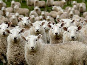 Peak Wool Representative Body calls for Nominations for Directors