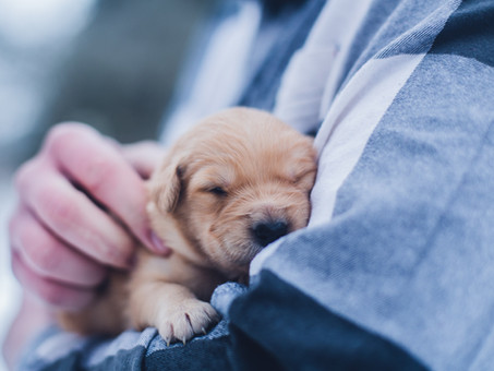 Why is it important to vaccinate your pets?