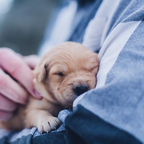 It's True! Dogs Love Your Baby Talk!