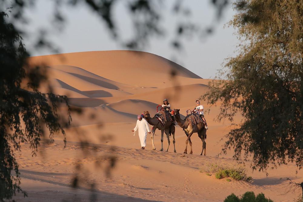 מסע גמלים במדבר דובאי