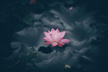 Image by Rui Xu