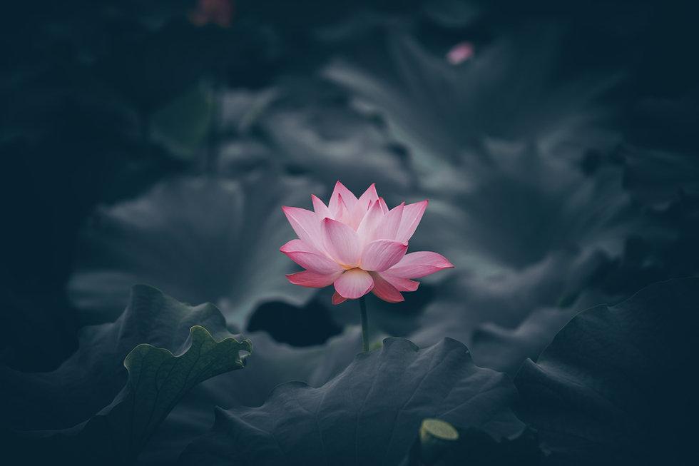 Image de Rui Xu