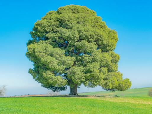 Make your Webster Oak Tree Teacher Award nominations